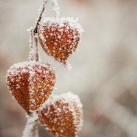 Зима в мелочах :: Ольга Семенова