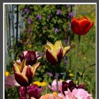 Разноцветье :: Алексей Дмитриев
