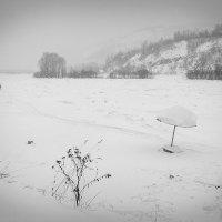 зимний пасмурный день :: Александр Потапов