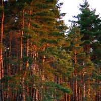 Полянка в лесу :: Анастасия Скворцова