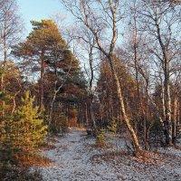 Северодвинск. Путешествие в лес :: Владимир Шибинский