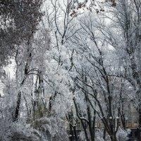 Зима в Мариинском парке :: Олег Лопухов