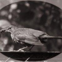 Птичка с крыжовником :: Aнна Зарубина