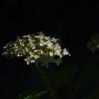 Цветы запоздалые сердечных потерь :: Ирина Данилова