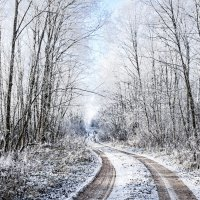 Лесная дорога... :: Анатолий Клепешнёв