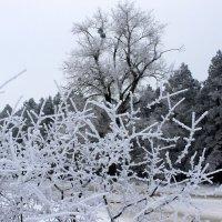 Идёт волшебница зима. ( Пушкин ) :: Валентина ツ ღ✿ღ