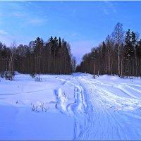 Лыжня. :: Любовь Чунарёва