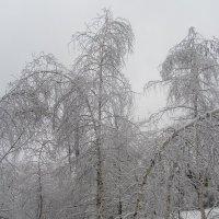 Красота зимная :: Oksana KU