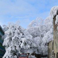 ясный морозный денек :: Мария Климова