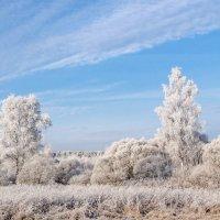 Декабрьский мороз... :: Анатолий Клепешнёв