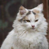 Портрет кошечки :: Ольга Винницкая