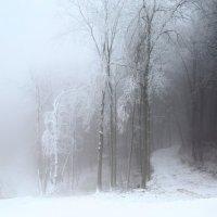 Зимний туман :: Карпухин Сергей