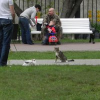 Ну, почему ко мне ты равнодушна? :: Oleg4618 Шутченко