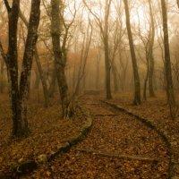 Осенняя картинка (воздушная перспектива) :: Sofia Rakitskaia