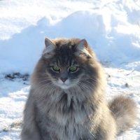 К зиме готова! :: Екатерина Литвиненко