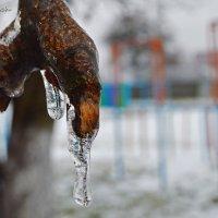 Ледяная лапа :: Инна - Lasso - Ленкевич