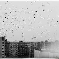 * :: Евгения Шаталова