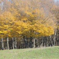 Чудо дерево! :: Анжела Шагбанова