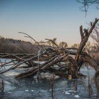 зима пришла :: николай смолянкин