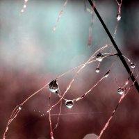 Осенние капли :: Anta Konstanta