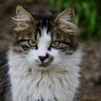 Кошка Мурка! :: Елена Нор