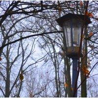 Задумчивый фонарик...) :: Svetlana Kravchenko