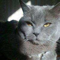 Кто то нашкодничал? Ну не знаю - я спал, крепко-крепко! :: Galina194701