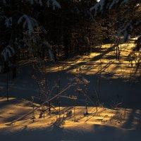 Дорога к солнцу :: Sergey Apinis