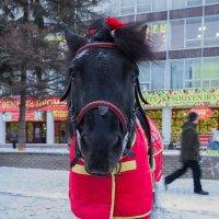 Пони тоже кони. :: Максим Баранцев