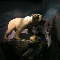 Хозяин Арктики :: Виктор