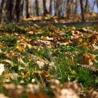 осень на траве :: Gor Yeghoyan