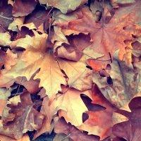 Последние листья :: Ольга Голубева