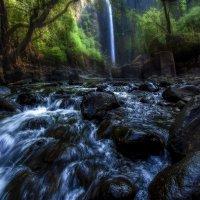 """""""Лучи света в темном царстве...""""...в джунглях Гоа,Индия... :: Александр Вивчарик"""