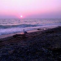 Sea-gull :: Наталья