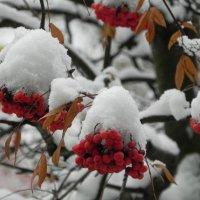 После снегопада. :: Oleg4618 Шутченко