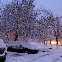 Первый снег... утро... :: Ирина Шарапова
