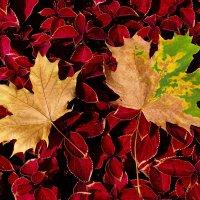 Осенние листья :: Николай Белавин