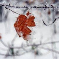 Зима пришла :: Александр Резуненко