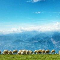 Артём Костюшин - Овцы на склоне Монте Бальдо, Италия