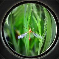 Комарик в зеленной стране :: Nina Streapan