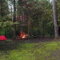 Бивуак в лесу... :: Nikanor