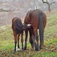 Мама и малыш. :: Наталья