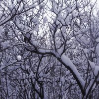 Эти снежные терема... :: Milocs Морозова Людмила