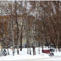 Берёзы в зимнем парке... :: Тамара (st.tamara)