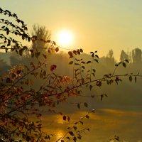 Утро на озере :: Nina Streapan