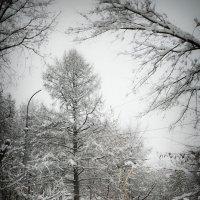 остановка в зиму :: Владимир Смирнов