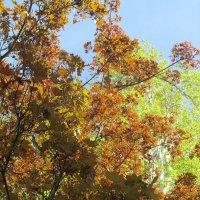 цвета весны :: tgtyjdrf