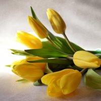 Желтые тюльпаны :: Галина Galyazlatotsvet