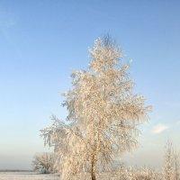 В зимнем наряде :: Сергей Михайлович
