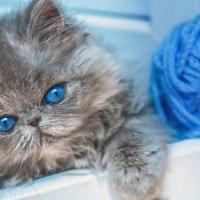 kitty :: Екатерина Abolmasova
